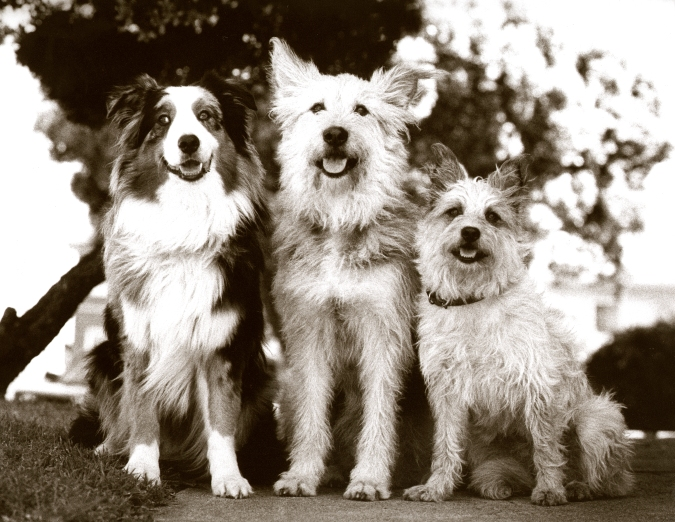 3 dogs fin
